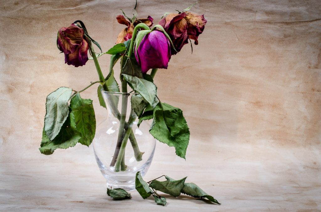 dried-red-roses-1385301637T1X