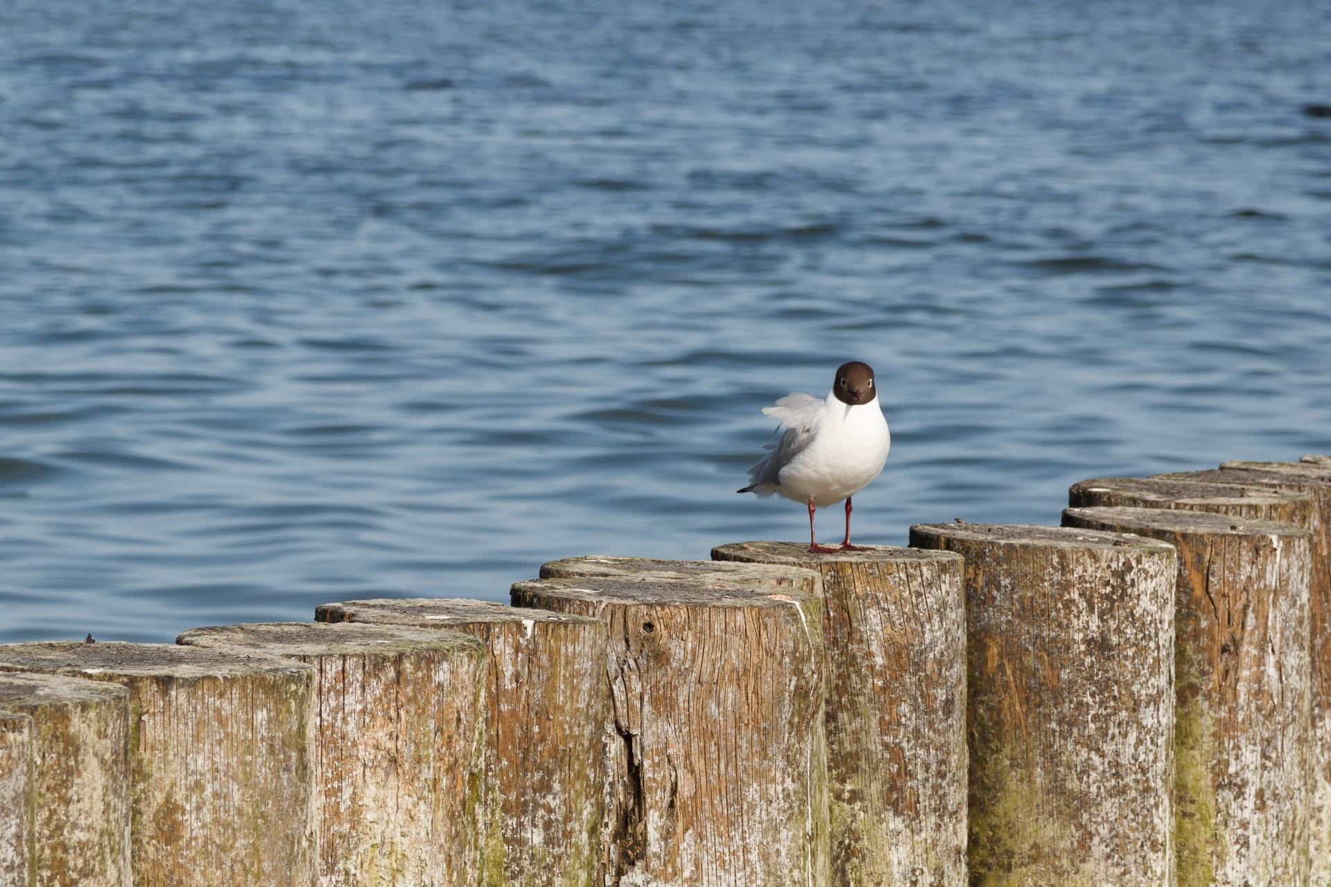 thoughtful-tern